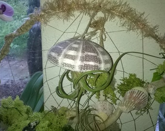 Mother's Day Dream Catcher, Giant Living Dreamcatcher is custom made with Alfonso Jelly Fish Air Plant, Tillandsia, moss,  Succulent plants