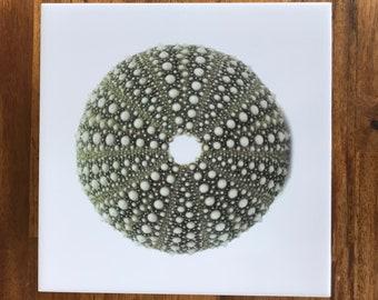 Kina (Sea Urchin) decorative tile