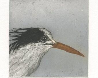 Elegant Tern, Original Fine Art Etching