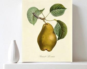 Pear Fruit Botanical Print Printable Pear Poster Vintage Botanical Illustration Encyclopedia Print Kitchen Wall Art Decor Digital Download