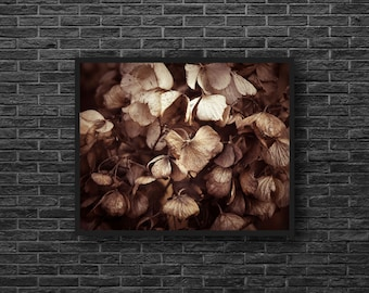 Botanical Sepia Photo - Dried Plants Photo - Dry Leaves - Botanical Photo - Paper Photo Print - Botanical Wall Art - Botanical Wall Decor