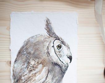 Olly, Great Horned Owl