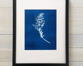 Blue Botanical Print, botanical fennel, Hand pressed botanical, cyanotype style, kitchen botanicals, real botanicals, Kitchen wall art