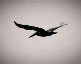 pelican pt.3, California. 2017.