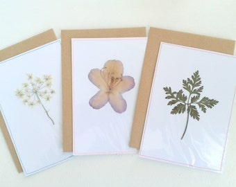 Droogbloemen en droogblad I Set van 3 I Ansichtkaart/Postcard