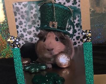 St patty guinea pig card