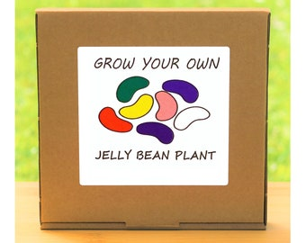 Unusual Windowsill Gardening Gift - Grow Your Own Jelly Bean Flowers Plant Kit