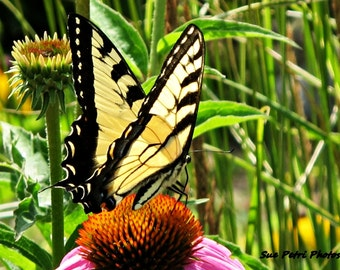 Yellow Swallowtail, Butterfly, Eastern Yellow Tiger Swallowtail, Nature Photography, Macro Photography, Color Photography, Garden Art