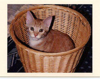 """A Tisket, A Tasket, """"Kitty In A Basket"""" - How Cute I Am"""