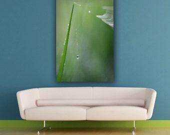 Green Grass Dew Drop Macro Photograph, Fragile Delicate Water Drop Photography, Minimalist Wall Art, Vertical Decor, Fine Art Photo Print
