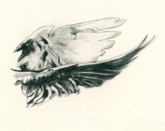 """Original Drawing 'Dove Wings' from 'Sabine's Notebook' approx. 4"""" X 3"""""""