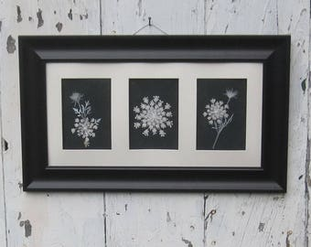 Real pressed Queen Annes Lace collage,10x20, in wide black frame