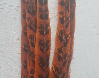 Rare Pheasant Tiger feathers 25-30cm Red Natural Green  Orange ringneck pheasant tail feathers