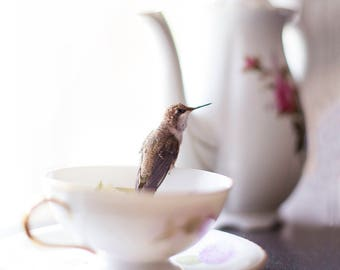 Hummingbird Tea Party, Photo Print