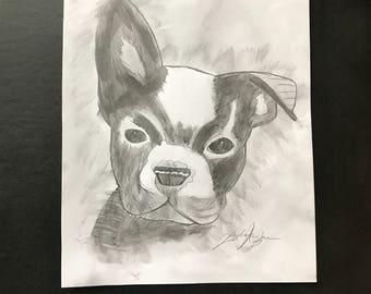 Boxer pup sketch