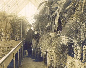 Greenhouse Interior Plants Gardeners Antique Vintage Real Sepia Photograph Postcard American History Horticulture Architecture Ephemera