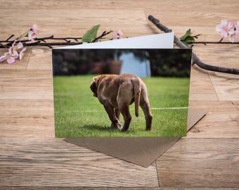 labrador retriever puppy blank inside greeting card, A5 Landscape, comes with envelope.