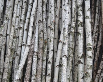 "Birch Poles/logs Two Poles 2.75"" to 3 1/2"" D x 8ft."