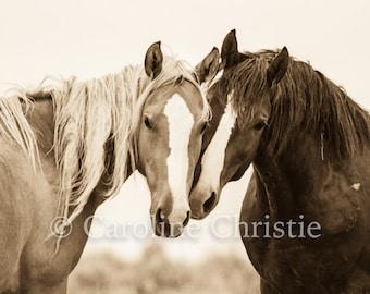 "Horse photography, horse prints,Wild Horse Photography, Horse Photographs, Sepia Tone, Mustangs. ""Soul Mates"""