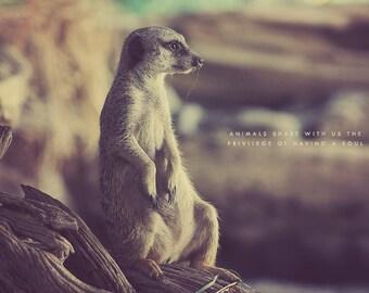 Meerkat Photography, Meerkat Photo, Meerkat Art, Meerkat Gift, Meerkat Lover, Cute Meerkat, Nursery Wall Art, Furry Meerkat, Meerkat Print