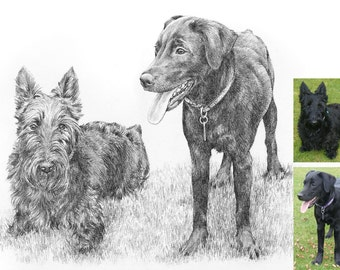 Pet portrait. Custom pencil drawing from photograph. Dog, cat, horse.