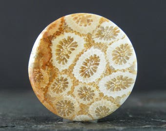 Round fossilized coral cabochon S8056
