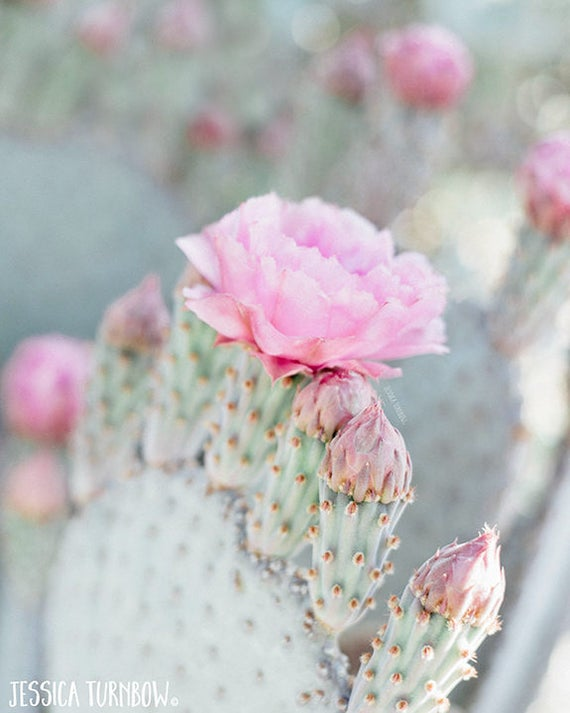 Cactus photography print pink and mint cactus flower blossom like this item mightylinksfo