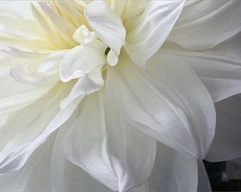 White Dahlia Wall Art, Floral Art Print,  Wedding Decor, Flower Photography, Flower Art