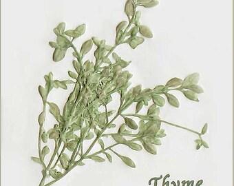 "4 1/4"" x 4 1/4"" Thyme Herb Tile"