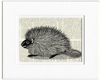 porcupine print no. 1 print