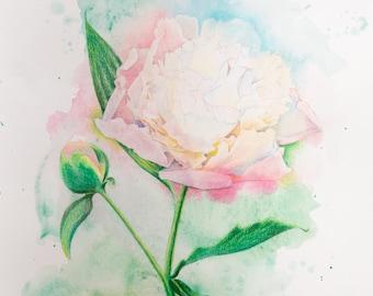 Watercolor Splash - White Peony