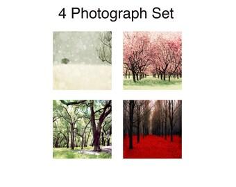 SALE, 4 Seasons Wall Art, Nature Photography, 4 Seasons Tree Print, Four Seasons Art, 4 Seasons Tree, Four Seasons Wall Art