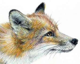 Fox ACEO Print, Colour Pencil Print, Animal Art Print, ACEO ATC