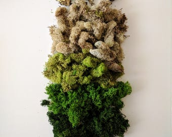 Reindeer Moss Variety Pack with three shades of green and beige