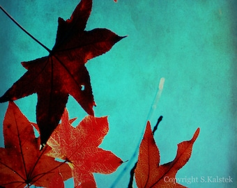 Autumn Maple Leaves Print  Burnt Orange and Teal Wall Art Fall Photography Colorful Leaves 8x8