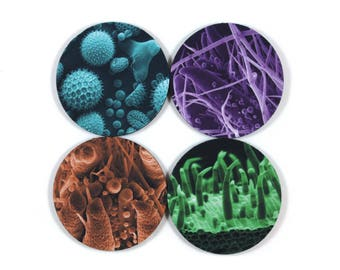 Microscopic Plant Anatomy Coasters, Set of 4, Scanning Electron Microscope SEM Imagery
