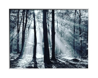 Light Through The Trees, Black and White, Limited Edition Print, Two Sizes Available, Landscape, Trees