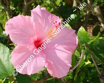Pink Flower  Fine Art 5X7 photo matted to 8x10