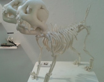 Sewn Bone – Two Headed Pug Skeleton. Faux Taxidermy, Vegetarian Ornament, Quirky Gifts, Weird Stuff, Curiosities and Oddities