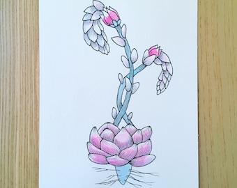Flower botanical N2