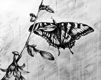 Butterfly in My Backyard