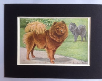 CHOW CHOW dog Louis Agassiz Fuertes Vintage Mounted 1919 plate print Congratulations Christmas Thanksgiving Birthday gift