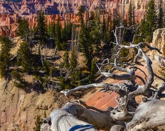 Southwest, Utah, Cedar Breaks, Utah, Tree, Red Rock, Landscape Photography, Digital Download, Photo