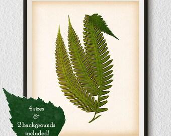 Botanical decor, Antique fern print, Fern illustration, Fern printable, Instant download, Home wall art, Botanical digital print, Print #82