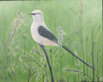 "Scissor-tailed Flycatcher print (11"" x 14"")--Original Wildlife Artwork"