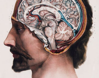 ML09 Vintage 1800's Medical Human Brain Surgical Anatomy Poster Re-Print Wall Decor A2/A3/A4