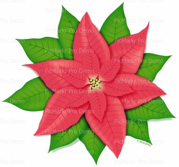 Christmas Poinsettia - Edible Cake and Cupcake Topper For Birthday's and Parties! - D713