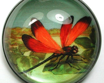 Golden Dragonfly Crystal Dome Clothing Button