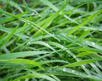 Dew-drop Grass