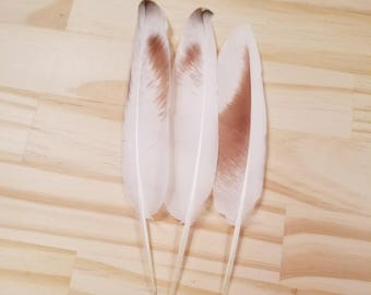 White Pigeon Feathers Cruelty Free Humane Naturally Molted Real Feathers #a76